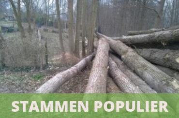 brandhout stammen populier